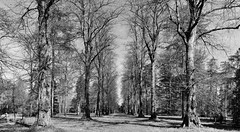 Lonely Forest (JoeChanPhotography) Tags: spring explorer historic season nationalarboretum gloucestershire colour woodland unitedkingdom seasonal merged branches plant forest trees treecollection colourful springcolours bw westonbirt england newbeginning gb