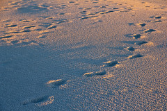 Footprints in Our Life (johnshlau) Tags: footprintsinourlife ourpicturesareourfootprintsit'sthebestwaytotellpeoplewewerehere ourpicturesareourfootprints joemcnally footprints life photographer sunrise sun sandybeach sandy sand beach dawn morning breezes smellofthesea sea bicheno tasmania australia nature landscape sunshine