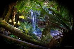 Russell Falls - Tasmania (mattpietkiewicz) Tags: waterfall waterfalls rainforest tasmania wilderness river explore hiking discover travel ferns trees nature