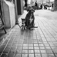 Confused leashes (Ricardas Jarmalavicius) Tags: blackandwhite blackandwhitephotography blackwhite noiretblanc adorenoir photography photooftheday photographize photographie photo iphoneography iphonephotography iphone6s wipplay street streetphotography straat streetphotographer dogs outdoor pets animals animalplanet ricardasjarmalavicius jarmalavicius barcelona humor comedy popphotocom popphoto bestphoto 121clicks viewbug ucklickvframe theappwhisperer monochrome mobilephotography mobiography mobitog mobilemag eyephoto flickr flickrsocial