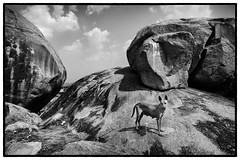 (Yet Another Guy With A Camera) Tags: dog dogs rocks street bnw blackandwhite andhrapradesh india andhra lepakshi