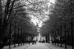 Brandenburger Tor (jenswambach89) Tags: berlin brandenburger tor schwarz weis bäume allee