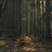 Deep in the Forest (Netsrak) Tags: eifel wald forst forest woods tree trees baum bäume nature natur landschaft landscape spring frühling april 2017 licht light schatten shadow haze dunst