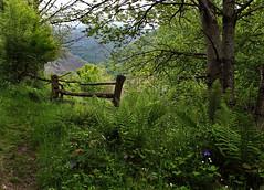 Una cancilla en Muniellos (Explore) (Geli-L) Tags: verde helecho asturias cancilla cangasdelnarcea aguileña laviliella reservademuniellos