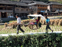 PA182920 (hardy1809) Tags: china pen dorf village rice terrace farming landwirtschaft harvest reis olympus crop bauer farmer ernte ep1 dazhi reisterrassen