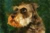 Harvey (alanpeacock2) Tags: dogs miniatureschnauzer painting photostream saltandpepper schnauzer watercolour art