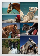 Portraits of strangers (aistora) Tags: horse colour beach animals collage composite cat island hotel mediterranean sunny resort camel mosai