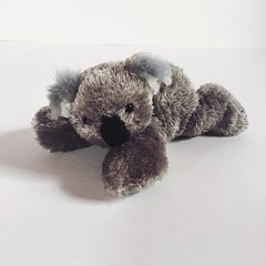 Elena Gilbert (lavendarfreesia) Tags: bear vampire stefan koala elena gilbert salvatore diaries