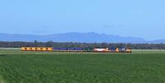 XR558 G536 G533 and G526 transfer grain and mineral sands wagons as they approach Murtoa (bukk05) Tags: gt26c3 xr558 g536 g533 g526 pn murtoa xrclass gclass pacificnational grain mineralsands wimmera westernstandardgaugeline standardgauge grampians emd emd16645f3b train tracks winter wheat railway railroad railpage rp3 australia export flickr freight horsham loco locomotive melbourne photograph rail station victoria victorianrailway vline vr wagons emd16645e3b explore fa freightaustralia grainbelt graincorp grainflow grainstorage horsepower mallee yard vhgy vhgf vhaf vhhf vhhx viterra hopetoun marmalake hamilton clyde broadmeadow