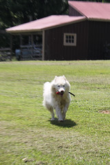 """There's My Happy Girl Princess • <a style=""""font-size:0.8em;"""" href=""""http://www.flickr.com/photos/96196263@N07/9557246672/"""" target=""""_blank"""">View on Flickr</a>"""