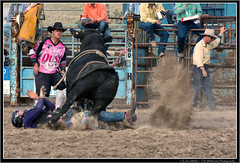 Yep that's gunna hurt (Seeking Nature | Aus) Tags: horses people dusty sports animals cowboys bareback nikon cattle action country bull bulls dirty ring riding nsw rodeo cowgirls bovine bullriding saddle wrestle bronc shute huntervalley steers barrell gresford d7100 thewhiteview
