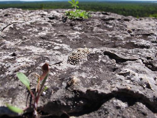 Cup and Saucer Trail 7