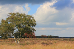 Nature of Drenthe, wonderful region in the Netherlands