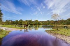 271013 Horse (Andrew_S84) Tags: longexposure horse 1022mm suttonpark leefilters littlebracebridge canoneos7d
