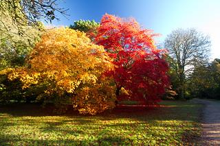 Autumn {EXPLORED 10.11.2013} Thank you!