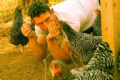 Evil Eye (CarbonNYC [in SF!]) Tags: catholicworkerfarm sheepranch takenbymarlon hens hen chicken chickens carbonnyc carbonsf