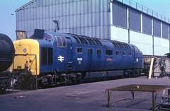 55001 Doncaster Works 18th June 1978 (Mr Bushy) Tags: er br 1978 napier britishrail ee doncaster topdeck deltic lner englishelectric class55 brblue railblue londonnortheasternrailway doncasterworks easternregion eetype5 vision:outdoor=0976