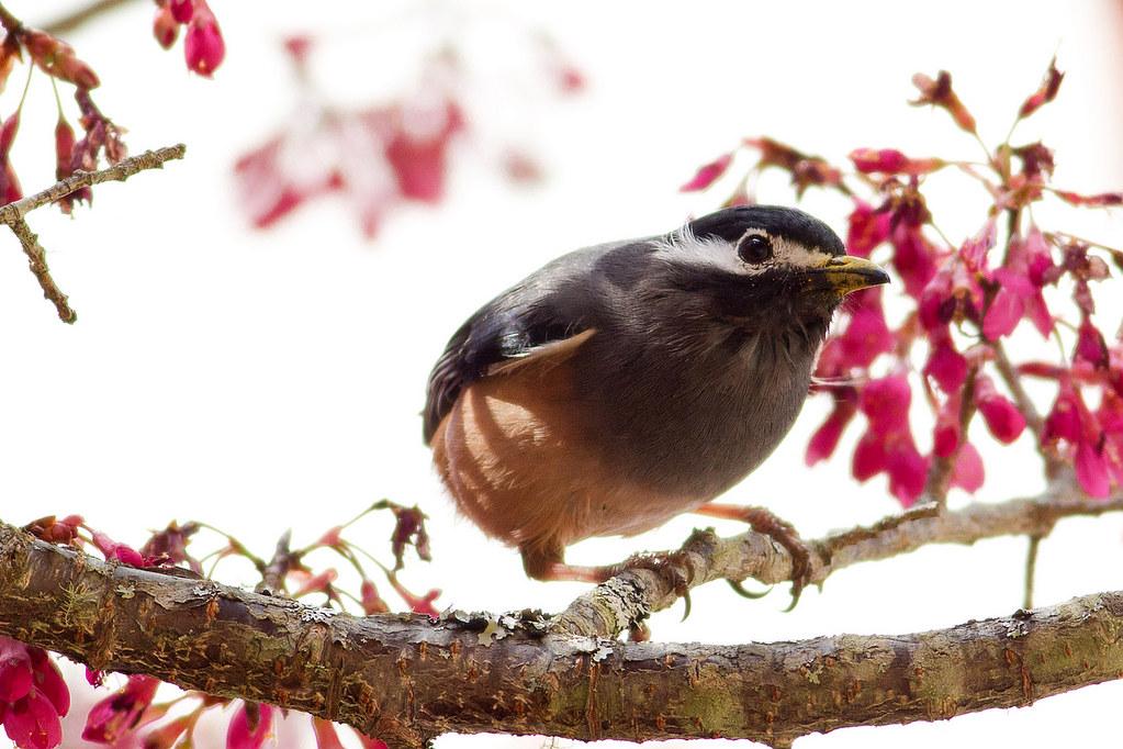 """再來""""鳥""""一下"""