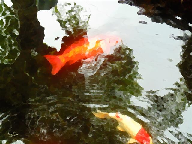 The world 39 s best photos of koi and koy flickr hive mind for Japanese ornamental fish