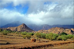 Le jour où la pluie viendra (mhobl) Tags: rain morocco maroc marokko tafraoute antiatlas