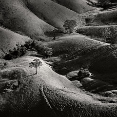 Hills of the Hunter (Xenedis) Tags: huntervalley landscape hills aerial aerialphotography trees animals blackandwhite dungog gresford workshop nsw newsouthwales bw australia fh ig