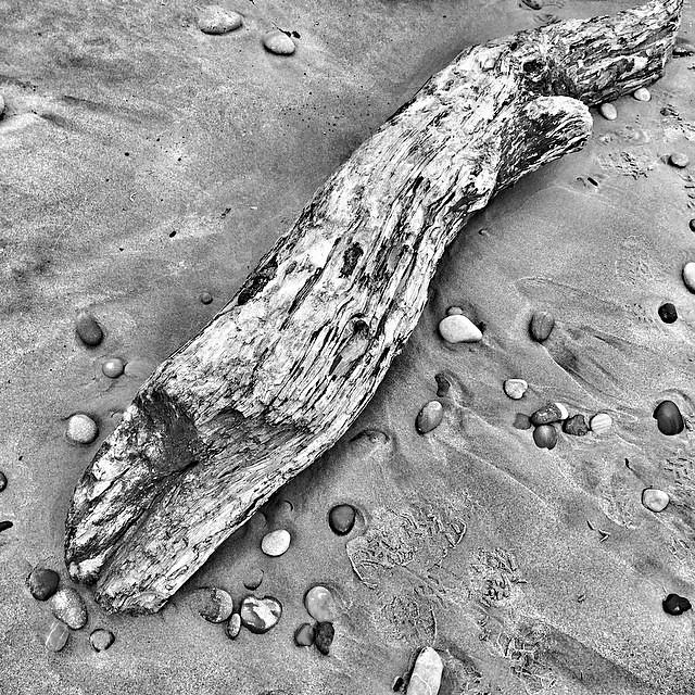 Beach debris. Porth Neigwl #cymru #wales #surreal42 #blackandwhite #beach