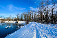 A Winter Wonderland.... (SonjaPetersonPh♡tography) Tags: mapleridge britishcolumbia canada kanakacreekregionalpark kanakacreek snow ice path walk trail nature trees woods landscape newsnow regionalpark bcparks water creek park nikond5200 nikon winter 2017 winterscene scenery scenic
