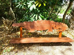 Only in Florida... (Helenɑ) Tags: bench florida park hamptonpinespark happybenchmonday sunshinestate carved wood