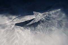 Ice shards (Helena Normark - Away) Tags: iceshards ice iceformations heimdal trondheim sørtrøndelag norway norge sonyalpha7 a7 lensbaby sweet50 lensbabysweet50