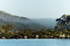 20170302-04-Morning mist at Lake Fanny (Roger T Wong) Tags: australia greatpinetier lakefanny np nationalpark sel70300g sony70300 sonya7ii sonyalpha7ii sonyfe70300mmf2556goss sonyilce7m2 tasmania wha wallsofjerusalem worldheritagearea bushwalk camp hike mist morning trektramp walk