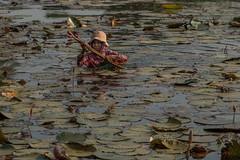 Cambodgienne ( Philippe L PhotoGraphy ) Tags: cambodge saigonhanoi asiedusudest asie vietnam krongsiemreap siemreapprovince kh
