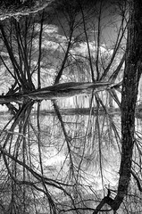 The War of the Worlds (Vanvan_fr) Tags: monochrome noiretblanc bw nb blackandwhite loire fleuve river eau water reflet reflection bois wood trees arbres upsidedown valléedelaloire valleyofloire clouds nuages cloudysky nature touraine tours tourscity ville city france photo gr troncs treetrunks