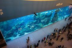Dubaj - Dubai Mall (zcesty) Tags: dosvěta sae spojenéarabskéemiráty dubaj akvárium sae2 ae