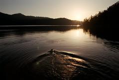 (Vedran F.) Tags: lokvarsko lake croatia dog sunset film photography 35mm agfa vista 200 nikon f100 nikkor 2428 af plustek 8100