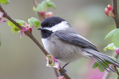 vandSunedsYol 2 (edpaul Photos) Tags: smallbirds bird wild