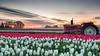 pink tractor under pink skies among pink flowers (Ben McLeod) Tags: graduatedndfilter johndeere mthood oregon woodenshoetulipfestival clouds dawn flowers sunrise tractor tulips