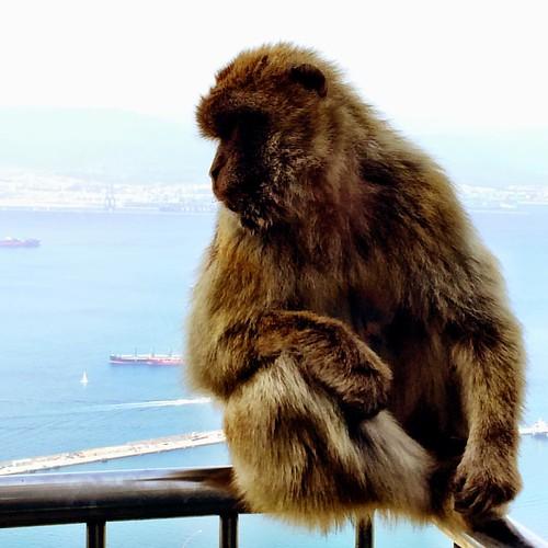 El mono pensante