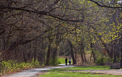 Enter the Woods (chantsign) Tags: spring trees overhang walking path leaves branches distance perspective park morning