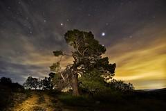 La senda del abuelo (bodyaristarco) Tags: tree árbol estrellas stars navalón nature naturaleza lightpainting pintarconluz noche fotografíanocturna valenciadenoche