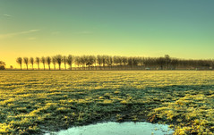 Mixing blue & yellow. (Alex-de-Haas) Tags: 50mm d5 hdr holland hollandseluchten nederland netherlands nikkor nikkor50mm nikon nikond5 noordholland thenetherlands westfriesland beautiful beauty boerenland buiten buitenshuis daglicht daylight farmland grasslands handheld highdynamicrange landscape landschap licht light meadow meadows mooi morning ochtend outdoor outdoors polder schoonheid skies sky sunrise sunriselight warm weiland weilanden winter zonsopgang