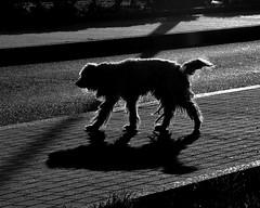 Un can abandoado/A lost dog (carlosdeteis.foto) Tags: carlosdeteis galiza galicia