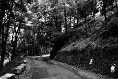 wpid-chakraata-21 (harshchiki) Tags: mountains india hills winter blackandwhite bw