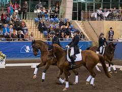 17429_Sydney_CDI_Quadrilles_0003.jpg (FranzVenhaus) Tags: athletes dressage australia equestrian riders horses ponies rug siec nsw sydney newsouthwales aus