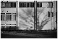 LEICA M MONOCHROM(Typ246) SUMMARON 2.8cm f5.6 (Camera of Bob) Tags: summaron28cmf56 leica m monochrom(typ246)  summaron 28cm f56