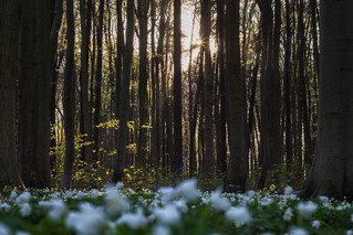 Sunset in the spring forest