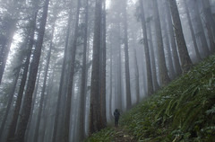 Quiet and Still (Emily Mayer) Tags: foggy fog woods forest trees oregon pnw