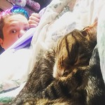 I've been sick and stuck on bed rest, but I've had my sentries the whole time. I think these kittens (pictured: cleocatra) are even getting tired of naps and snuggles. 😹 ... #meow #sick #catsofinstagram #cleocatra #tabby #tabbykitten #mermaidhair thumbnail