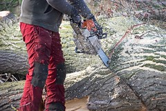 Cutting trees (René Maly) Tags: renémaly chainsaw stihl manualfocus tamron sp 23a 60300mm adaptall2