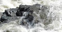profile (albyn.davis) Tags: nature rock water stream river rapids splash