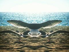 Surrealistic Sunset 5... #birds #birdsofinstagram #seabird #seagulls #beach #ocean #sea #sand #water #wings #nature #travelphotography #travel #losangeles #lalife #dockweilerbeach #sky #sunset #flight #flying #surreal #surrealism #artphotography #artphoto (richarde9000) Tags: mirrorimage ocean sea seagulls birds beach instagramapp square squareformat iphoneography perpetua